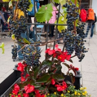 """Меерсбург Meersburg 2014 • <a style=""""font-size:0.8em;"""" href=""""http://www.flickr.com/photos/134472863@N03/20255430449/"""" target=""""_blank"""">View on Flickr</a>"""