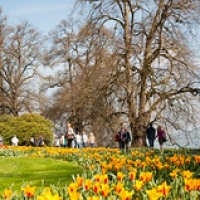 "Mainau-bodensee-org-3897 • <a style=""font-size:0.8em;"" href=""http://www.flickr.com/photos/134472863@N03/26941832002/"" target=""_blank"">View on Flickr</a>"
