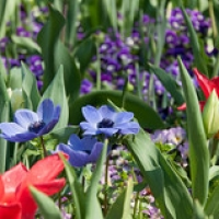 """Mainau-bodensee-org-4011 • <a style=""""font-size:0.8em;"""" href=""""http://www.flickr.com/photos/134472863@N03/26432253713/"""" target=""""_blank"""">View on Flickr</a>"""