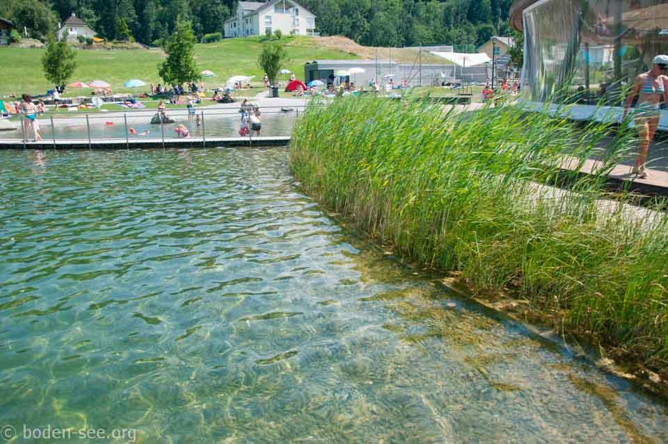 камыши рядом с искусственным озером, Лихтенштейн