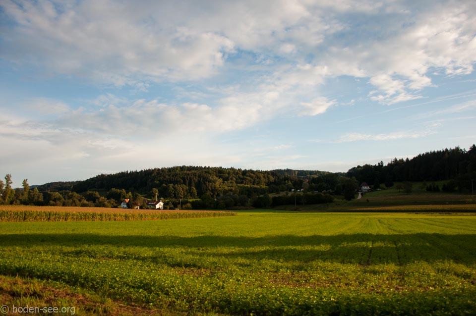 поля в германии