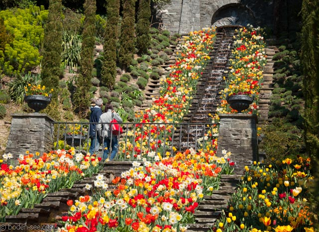 фонтан итальянские цветы майнау
